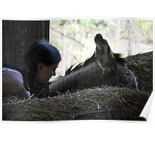 Donkey Whisper Poster