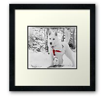 I don't care if someone is stuck again, I'm still not Lassie. Framed Print