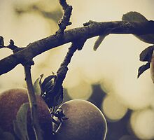 Apples by Nicola Smith