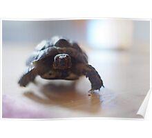 Marauding Tortoise Poster