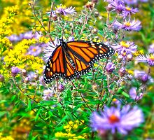 Aster Resting by Diane E. Berry