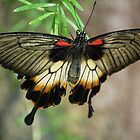 Fantastic Butterfly by Ralph Angelillo