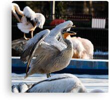 Yawning pelican Canvas Print
