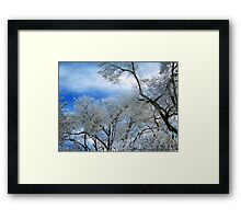 Frozen Trees (Ice Fog) Framed Print