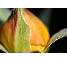 Newborn Rose Photographic Print