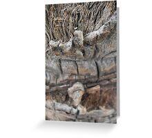 Tree Scars Greeting Card