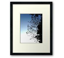 Blue Sky Black Trees Framed Print