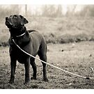 """On The Peg""-Gundog/Shooting Print by AndyBiggar"