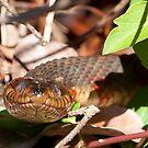 Well Hello Mr. Banded Water Snake by Joe Jennelle