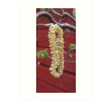 Willow catkin Art Print