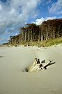 MVP33 Darss West beach, Germany. by David A. L. Davies
