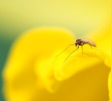 Freddy the Fly by LAaustin