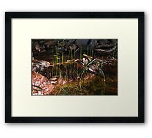 Tranquil Growth Framed Print