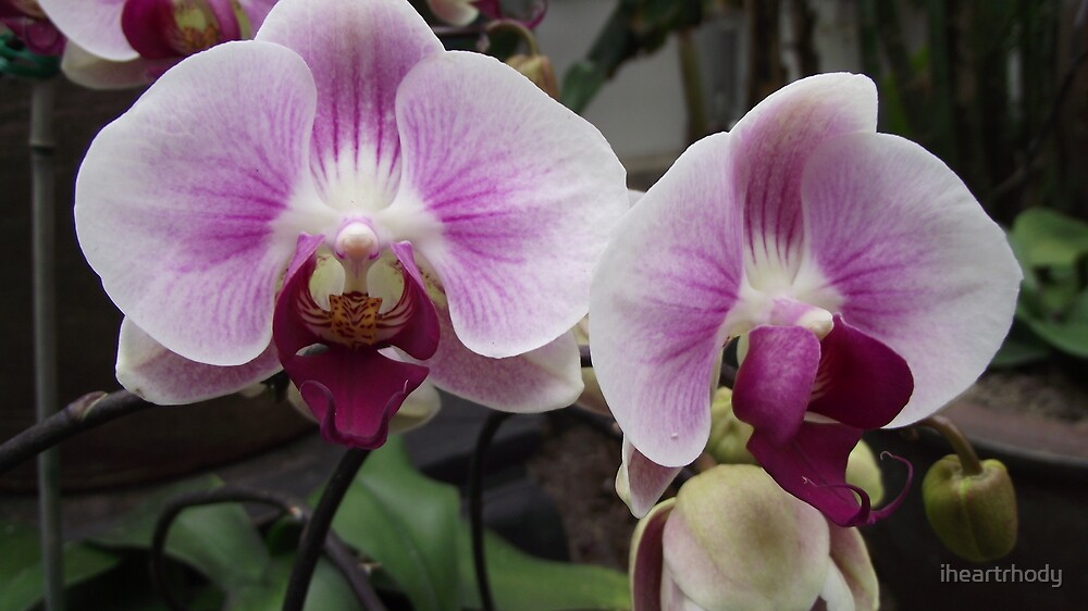 purple orchids by iheartrhody