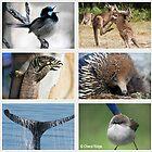 Australian Wildlife - 250+ species by Cheryl Ridge