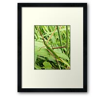 Beauty is in the eye of the beholder, aren't I beautiful Framed Print
