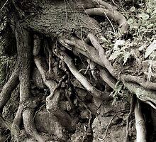 Tangled Roots - Monrovia, CA by dirtfaery