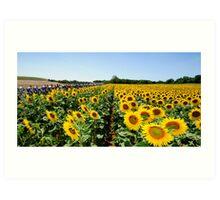 Tour de France Sunflowers Art Print