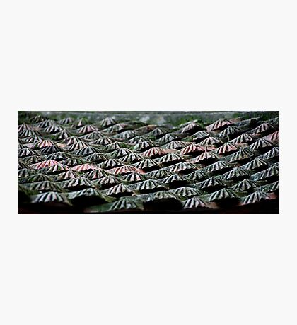Roof Tiles Photographic Print