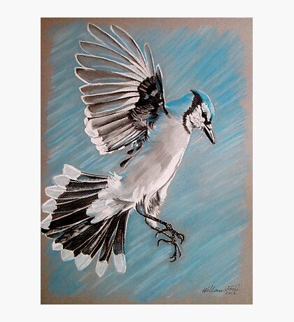 """Blue Jay"" Photographic Print"