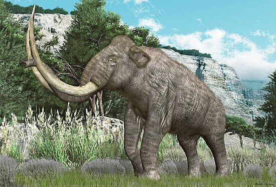Columbian Mammoth by Walter Colvin