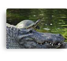 Alligator and Turtle, As Is Canvas Print