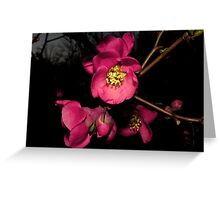 The Lovely Flowering Quince Greeting Card
