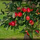 Summer Apples by ©FoxfireGallery / FloorOne Photography