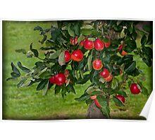 Summer Apples Poster