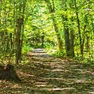 Through the woods by PhotosByHealy