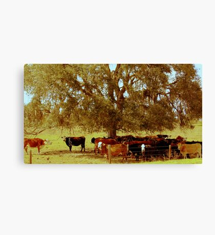 Rural Charm Canvas Print