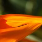 Bird of Paradise Flower Macro by Anna Lisa Yoder