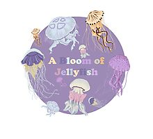 A Bloom of Jellyfish Photographic Print