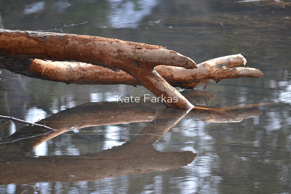 Tree at Fernon Lake by Kate Farkas