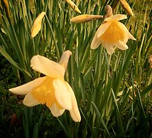 Spring, Well Hall Pleasaunce by Lisa Hafey