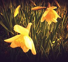Spring at Well Hall Pleasaunce by Lisa Hafey