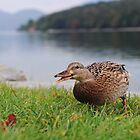 Duck! by supersnapper