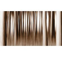 Monochrome Forest Photographic Print