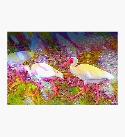 Following the flock Photographic Print