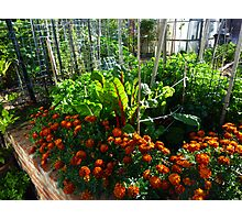 Home Vegetables Photographic Print