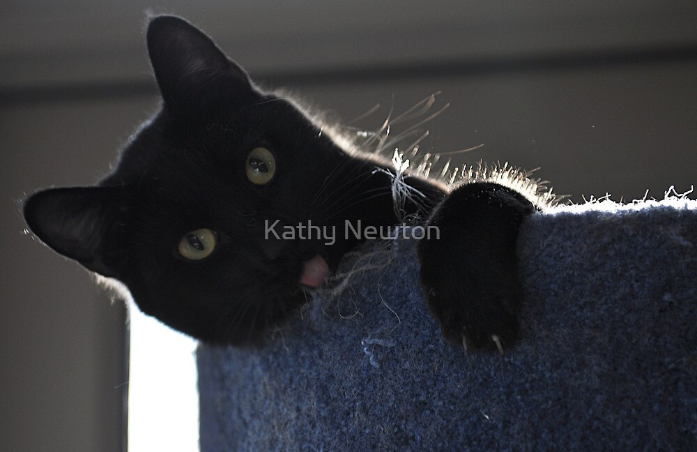 Silly Times by Kathy Newton