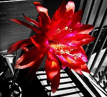 Cactus Flower Behind Bars by Michael May