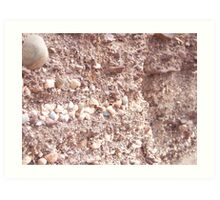 Layers of Shells - Dunbar, Scotland Art Print