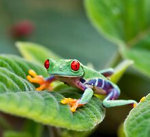 Wide Eyed by Claudia Kuhn