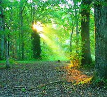 Sunlight through trees by DaveMoffatt