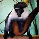 Diana Monkey by Roxy J
