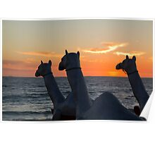 "Camels - Cottesloe ""Sculpture by the Sea"" Poster"