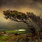 From Helman Tor by dmacwill
