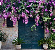 Bougainvillea over door, Torre di Palme, Italy by Eros Fiacconi (Sooboy)