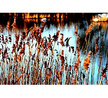 Reeds on the Water Photographic Print